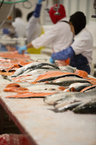 Northern Fish Products line