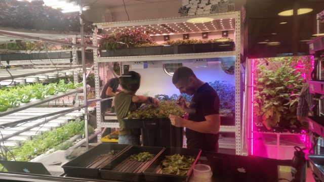 Vertical farming Farm.One copy